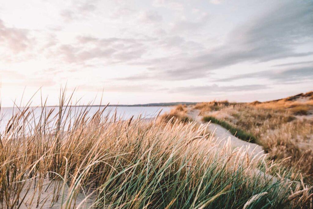Eesti looduskosmeetika